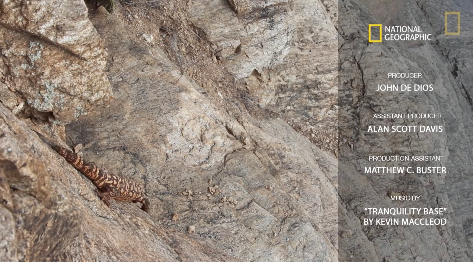 An orange and black Gila monster scales the wall in Saguaro National Park in Tucson Arizona as National Geographic credits appear