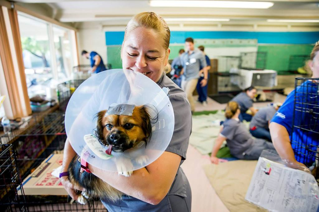 Smiling woman holding a dog wearing a cone after having been neutered at the mobile animal clinic.